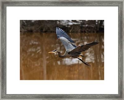 Heron In Winter - C1944d Framed Print by Paul Lyndon Phillips