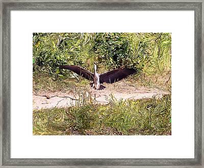 Heron Landing Framed Print by Carolyn Reinhart