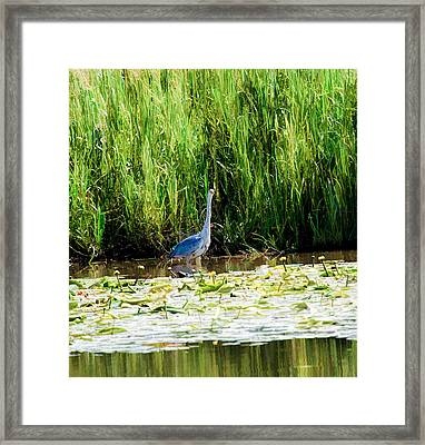 Framed Print featuring the photograph Heron by Leif Sohlman