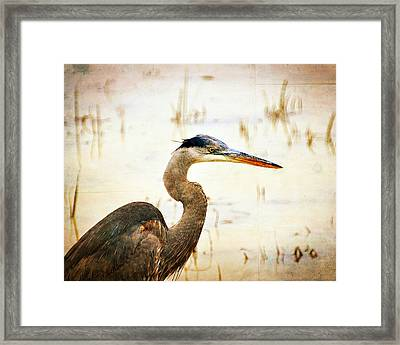 Heron Framed Print by Marty Koch