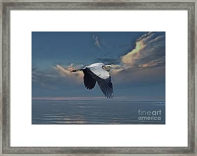 Heron Night Flight  Framed Print