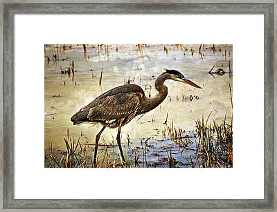 Heron On A Cloudy Day Framed Print by Marty Koch