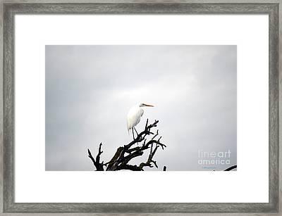 Heron On A Dead Tree Framed Print