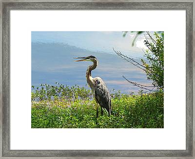 Heron On Lake Framed Print