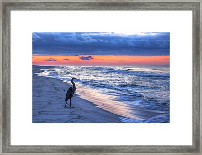 Heron On Mobile Beach Framed Print