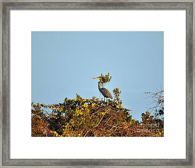 Heron Perch Framed Print