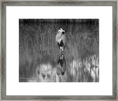 Heron Reflection Framed Print by Bruce A Lee