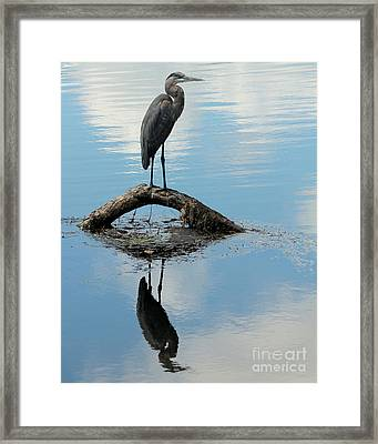 Framed Print featuring the photograph Heron Reflection by Kenny Glotfelty
