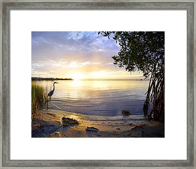 Heron Sunrise Framed Print