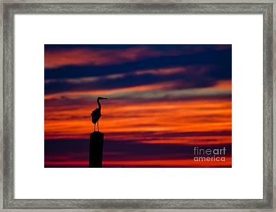 Heron Sunset Silhouette Framed Print by Richard Mason