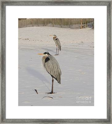 Heron Two Framed Print by Deborah DeLaBarre