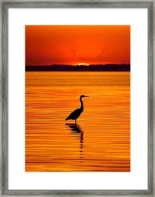 Heron With Burnt Sienna Sunset Framed Print