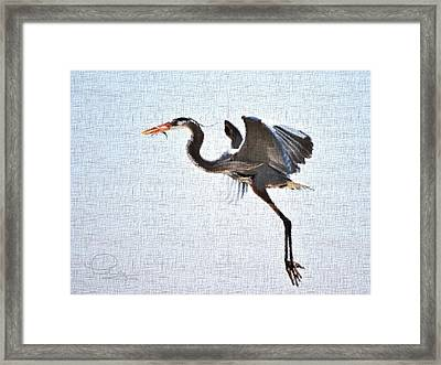 Framed Print featuring the photograph Heron With Catch by Ludwig Keck