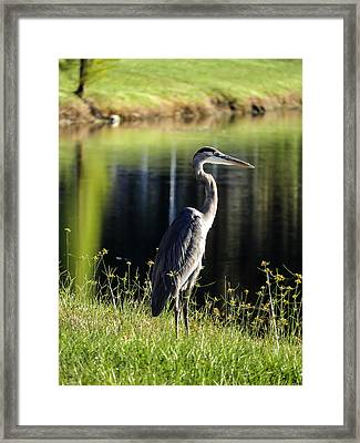 Heron Framed Print by Zina Stromberg