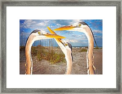Herons Framed Print by Betsy Knapp