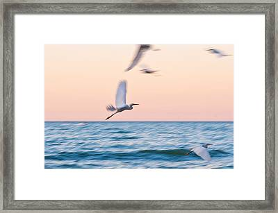 Herons Flying Over The Sea  Framed Print by Jose Maciel