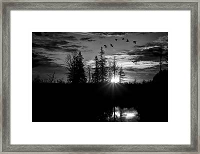 Herons In Flight - Black And White Framed Print
