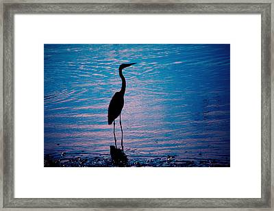 Herons Moment Framed Print