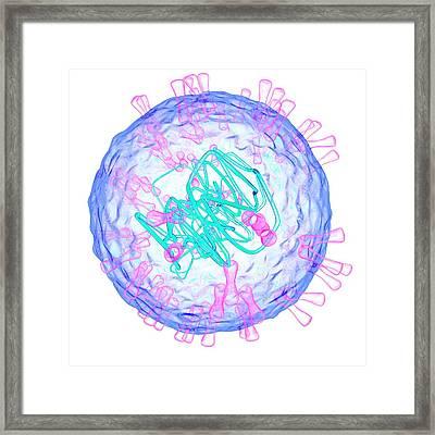 Herpes Simplex Type 2 Virus Framed Print