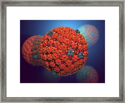 Herpes Simplex Virus Framed Print