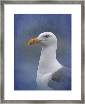 Herring Gull Framed Print