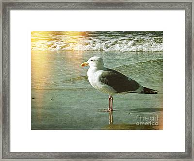 Herring Gull Watching Framed Print