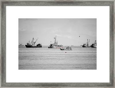 Herring Season Georgia Strait Framed Print by Roxy Hurtubise