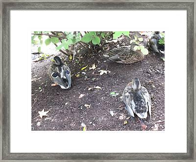 Hershey Park - 121249 Framed Print by DC Photographer
