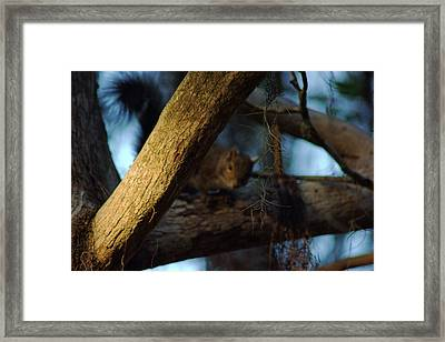 Framed Print featuring the photograph He's Watching You by Daniel Woodrum