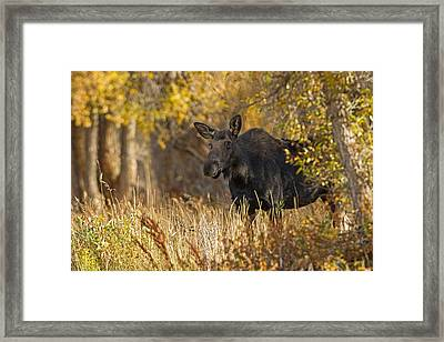 Hesistant Framed Print by Sandy Sisti