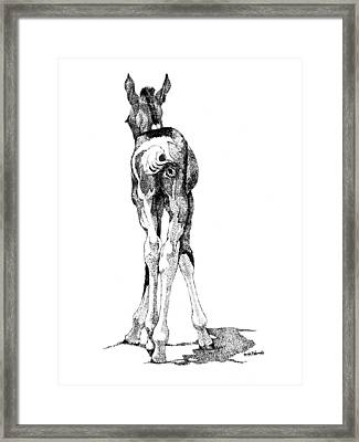 Hesitation Framed Print by Renee Forth-Fukumoto