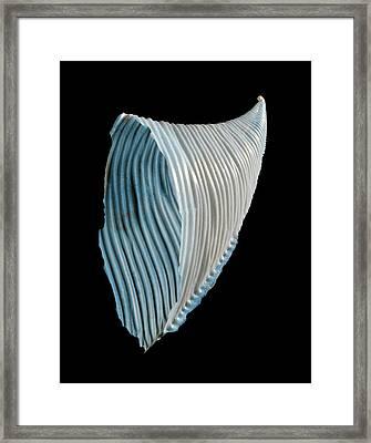 Heteropod Sea Snail Shell Framed Print by Gilles Mermet