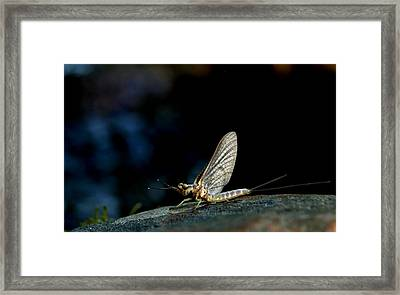 Hex 1 Framed Print by Thomas Young
