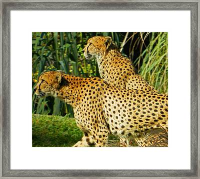 Hey Bro - Do You See What I See? Framed Print by Emmy Marie Vickers