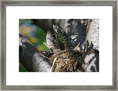 Hey - Can You Move Over? Framed Print by Donna Kennedy