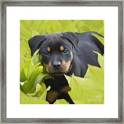 Hey Here I Am Framed Print by Heiko Koehrer-Wagner