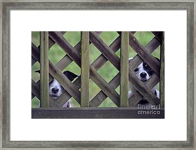 Hey... I Can't See Framed Print by David G Nichols