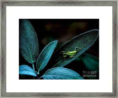 Framed Print featuring the photograph Hey  I'm Trying To Hide by Debra Fedchin
