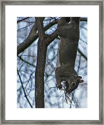 Hey I'm Upside Down Framed Print by D Wallace
