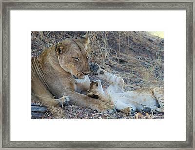 Hey Mom Framed Print by Frank Wittmann