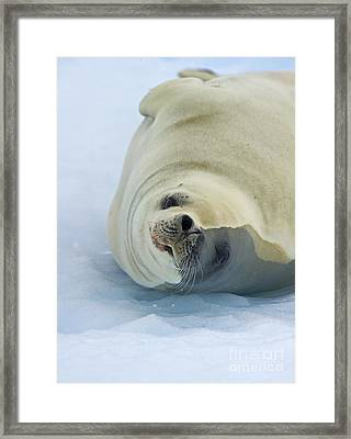 Hey... Framed Print by Nina Stavlund