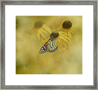 Hey Susan There Is That Butterfly Again Framed Print by Diane Schuster