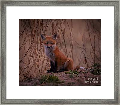 Hey There Framed Print by Steven Reed