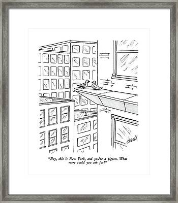 Hey, This Is New York, And You're A Pigeon.  What Framed Print by Tom Cheney
