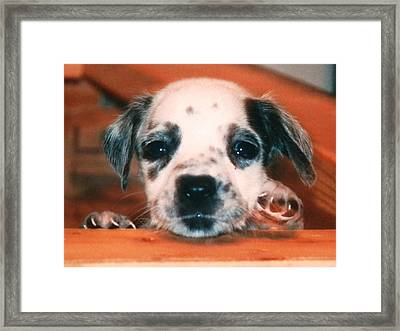 Dalmatian Sweetpuppy Framed Print