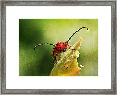 Hey - What Are You Doing On My Leaf ? Framed Print by Donna Kennedy