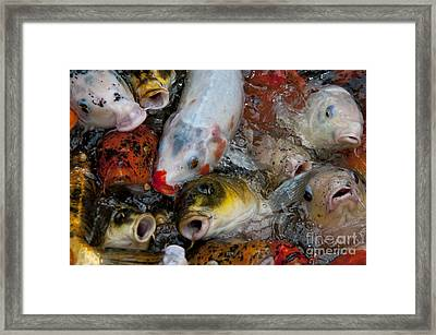 Hey Whats Happening Framed Print by Wilma  Birdwell