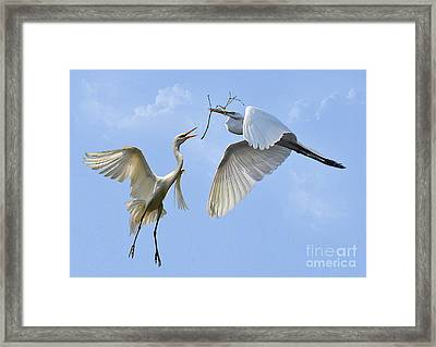 Hey...go Find Your Own Stick Framed Print by Kathy Baccari