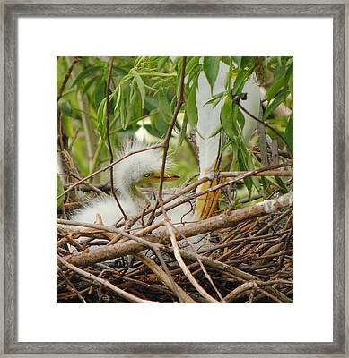 Hi Mommy Framed Print by Michael Terracina