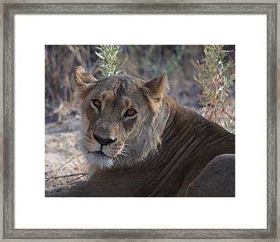 Framed Print featuring the photograph Hi There by Allan McConnell